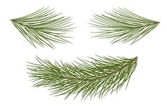 Set of pine branches for festive decor. Isolated without a shado. Set for Christmas decor. Drawing. Pine branches isolated on a white background without a shadow Stock Image