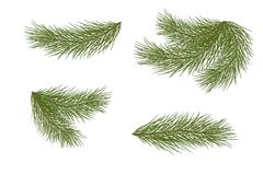 Set of pine branches for festive decor. Isolated without a shado. Set for Christmas decor. Drawing. Pine branches isolated on a white background without a shadow Royalty Free Stock Images