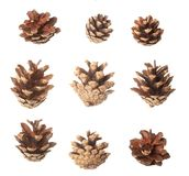 Set of pine cones Royalty Free Stock Photo