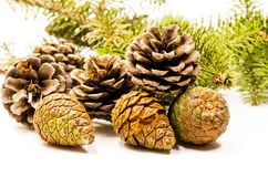 Set of pine cones with fir tree brunch Royalty Free Stock Images