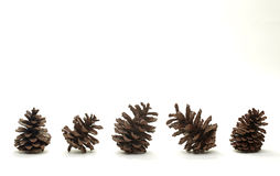 Set of pine cones isolated. On white background stock photography