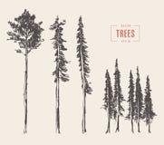 Set pine trees illustration engraved style drawn Royalty Free Stock Photos