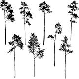 Set of pine trees Stock Images