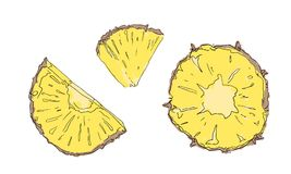 Set of pineapple slices vector illustration