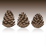 Set of pinecones in vector. Set of brown pinecones in vector stock illustration
