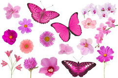 Set of pink color flowers and butterflies isolated on white royalty free stock image