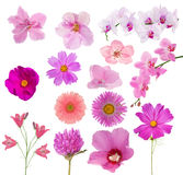Set of fourteen pink color flowers on white Royalty Free Stock Photo