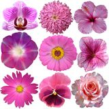 Set of Pink Flowers Royalty Free Stock Images