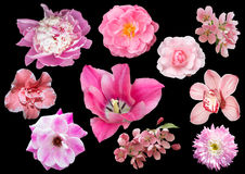 Set of pink flowers isolated on black background. A collection of ten pink flowers royalty free stock photography
