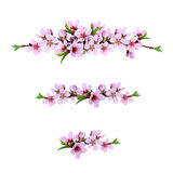 Set of pink peach twigs line arrangements Stock Image