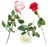 Set from pink, red, white rose flowers isolated Stock Photo