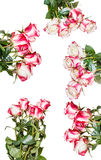Set of pink rose bouquets isolated on white Stock Photography
