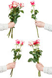 Set of pink rose bunches of flowers isolated Stock Photos