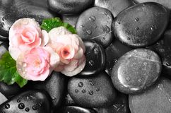 Set of pink rose flowers on pebble Royalty Free Stock Photos