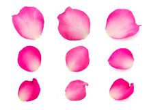 Set of pink rose petals Stock Photography
