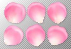 Set of pink rose petals on a transparent background vector illustration