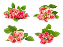 Set of pink roses Stock Photography