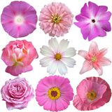 Set of Pink White Flowers Stock Images