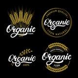Set pisać dla naturalnych świeżych produktów Organicznie ręka piszący list logów, etykietki, odznaki lub emblematy, Obraz Stock