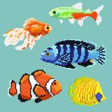 Set of pixel exotic fish. Isolated on a blue background. For games and mobile applications Stock Photo