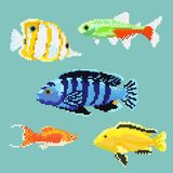 Set of pixel exotic fish. Isolated on a blue background. For games and mobile applications Stock Images