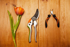 Set of plant care utensils on wodden plate Royalty Free Stock Image