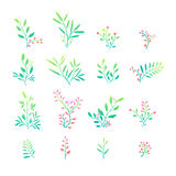 Set of plant elements. Bouquets, kits, ornaments Stock Images