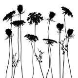 Set of plant elements Stock Photography