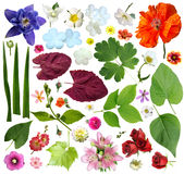 Set of plant elements - flowers and leaves. Stock Image
