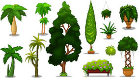 Set of plant Royalty Free Stock Photos