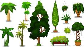 Set of plant Royalty Free Stock Photos