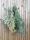 Set of plant ornament royalty free stock photos