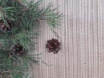 Set of plant ornament stock photo
