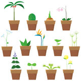 Set of plants Stock Photo