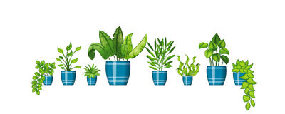 Set of plants in flowerpot Royalty Free Stock Image