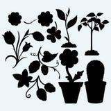 Set plants Royalty Free Stock Image