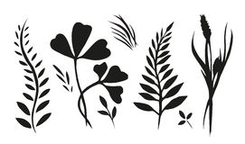 Set with plants, herbs and grasses painted ink Royalty Free Stock Image