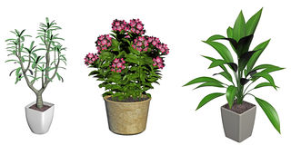 Set of plants in pots Stock Photos