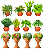 Set of plants in pots. Illustration Royalty Free Stock Images