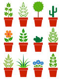 Set of plants in pots Royalty Free Stock Images