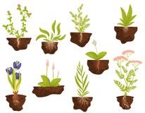 Set of plants with roots in the ground. Vector illustration. royalty free illustration
