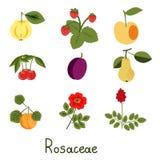 Set of plants Royalty Free Stock Image