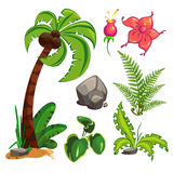 Set of plants Stock Image