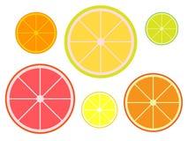 Set plasterki cytrusy tangerine, pomelo, wapno, grapefruitowy, cytryna, pomarańcze ilustracji