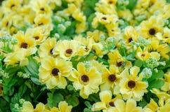 Set of  plastic flower Stock Photography