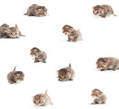 Set - playful kittens Royalty Free Stock Images
