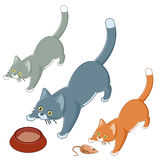 Set of playing cats Royalty Free Stock Photography