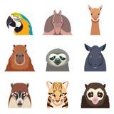 Set południowe America zwierząt mieszkania ikony ilustracji