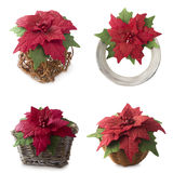 Set of Poinsettia. Collage of handmade flower fabric foam-iran. Royalty Free Stock Image