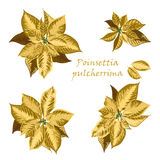 Set of Poinsettia flowers in golden color Royalty Free Stock Image